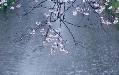 『春雨』の画像