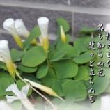 『控え目な花』の画像