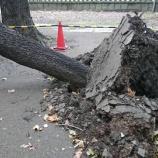 『台風24号ヤバイ』の画像