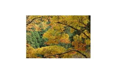『京都、高雄山に行きました.』の画像