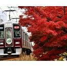 なごりの紅葉と鉄道