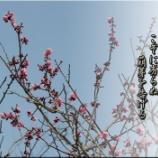 『萌芽を告げる』の画像