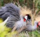 千葉の公園にアフリカの鳥? ネットや口コミで話題
