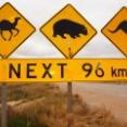 【画像】世界の動物道路標識など