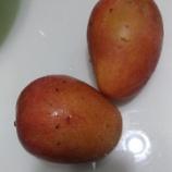 『マンゴー始まってます!』の画像