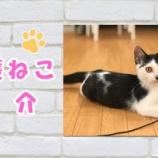 『【保護猫紹介】うにくん♂(子猫)とっても可愛らしい声でお友達を呼んでいます♪』の画像