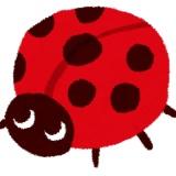 【閲覧注意】昆虫の樹脂標本をみんなに知って欲しい