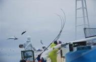 カツオ漁師の年間休日wwwwwwwwwwwww