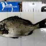 『ホゲッてんじゃないか?柳井市の黒鯛(チヌ)釣り #043』の画像