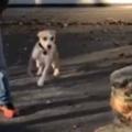 イヌは誰だかわからなかった。女性兵士が1年ぶりに帰宅する → 犬の反応はこうなります…