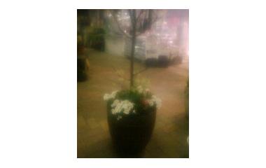 『春を告げる花たち小戸店』の画像