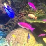 『熱帯魚観賞の裏で起きていること』の画像