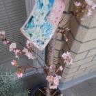 『咲きました』の画像