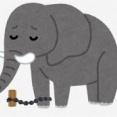 【動物】ボツワナの謎のゾウ大量死、シアノバクテリアの毒素が原因だった 政府発表