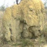 『オーストラリア ケアンズ旅行記11 でかくて頑丈!オーストラリアの蟻塚が凄い』の画像
