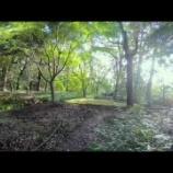 『鎮守の森下鴨神社』の画像