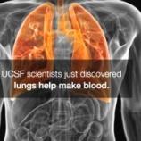 『肺に造血機能』の画像