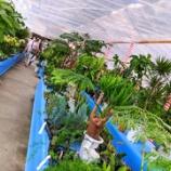『1万5千坪の園芸店「国華園」にウホウホ』の画像
