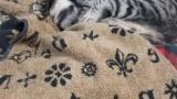 ウチの猫がダイエットカリカリに入ってるニボシだけ残すんだが