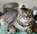 捨てられた子猫、駐在所の人気猫に おまわりさんを「広報担当」でお手伝い