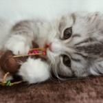 動物とかみて可愛いって思う感情って心理学的にみて何のためにあるの?