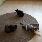 鹿児島の猫カフェ経営者が逃亡!4匹の猫が死亡し13匹が衰弱と悲惨な状態に…