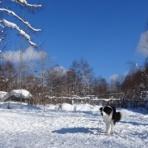 犬と森林浴:大雪山麓のドッグラン日記