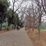 『正月の東大和南公園』の画像