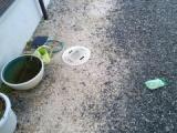 『メダカのいる睡蓮鉢の観察2』の画像