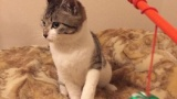 ワイ、野良猫を保護して1ヶ月経つもまだビビられる(※画像あり)