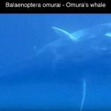 『新種ツノシマクジラの群れと未知の生物たち』の画像