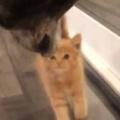 新入り子ネコが「てくてく」歩いていた。スリスリ♪ → 見守る犬とこうします…