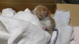 挟まってた子猫を助けたんだが(※画像あり)