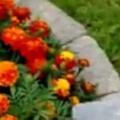 【毛玉】 庭の花壇の中に何かいる。そ~っと覗いて見てごらん♪ → そこに隠れていたのは…