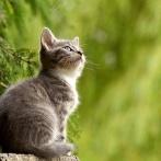 【悲報】猫ちゃん、とんでもない理由で捨てられてしまう……(動画あり)