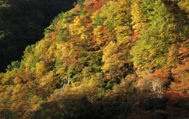 『松川渓谷の紅葉』の画像