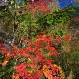 『秋の気配』の画像