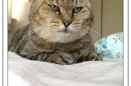 【画像あり】うちの猫に「んまんま食べる人ー!」って話しかけると「ンニャッ!」って返ってくるんだがwwwwwwwwのサムネイル画像