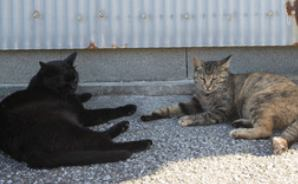 まったり井戸端会議をする猫たち