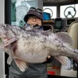 『3月31日 釣果 スロー・ライトジギング クロソイの最大は52センチ』の画像