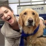 『空港癒し犬2』の画像