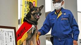 【岐阜】署員約10人が1時間半かけて捜索した行方不明の女性、警察犬アンジーが3分で見つける