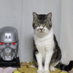 キジトラ猫リキちゃんと飼い主の気ままな毎日~猫と暮らす幸せ~