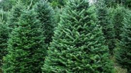 【木違い】韓国「世界中のクリスマスツリー、知ってみれば我が国が原産地ニダw」