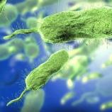 『バクテリア、抗生物質から「友」救うため自己犠牲』の画像