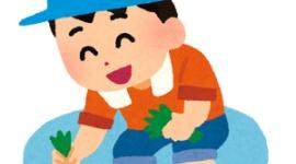 【韓国】農村振興庁「国産品種米を普及、5年以内に日本品種と置き換える」