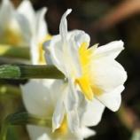 『スナップショット「凱風快晴」(8)早春の賦』の画像