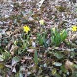 『ちいさい春みつけた........』の画像