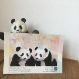 『Puncheno個展 Happy Panda Party』の画像