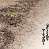 『茄子とピーマン、キュウリ苗』の画像